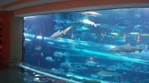 Shark Tank Golden Nugget Pool Las Vegas