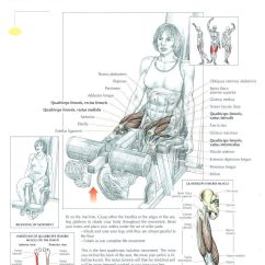 Lower Back Exercises Diagram Lutron Lighting Control Wiring Leg Extensions Legs And Glutes Pinterest