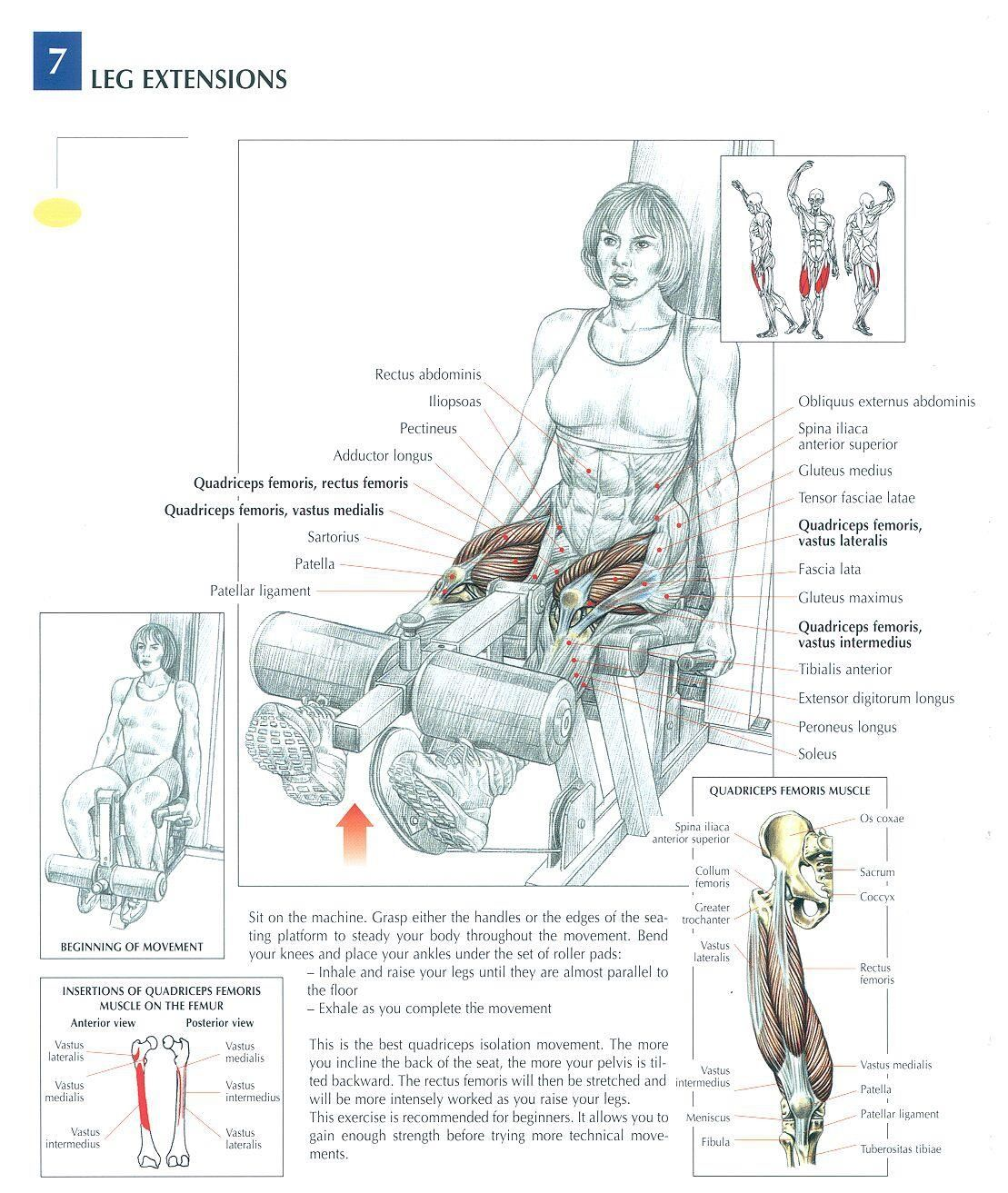 lower back exercises diagram hunter fan capacitor wiring leg extensions legs and glutes pinterest