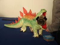 Pug dog Godzilla costume | Rigby Bear | Pinterest