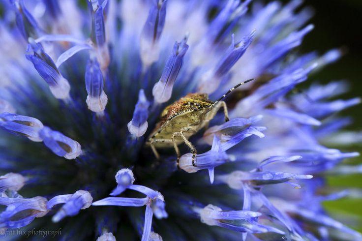 Un bug nel blu da Masuki Iizuka su 500px