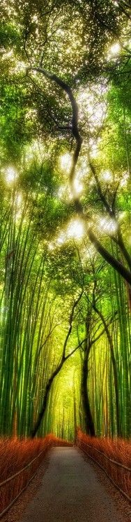 """Terra del Sol Levante"" (Arashiyama, Kyoto, Giappone)"