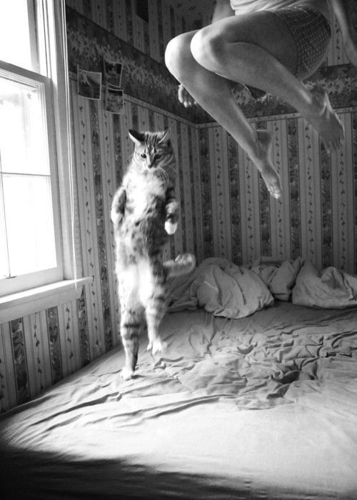 Cat Jumping On Bed Pinterest