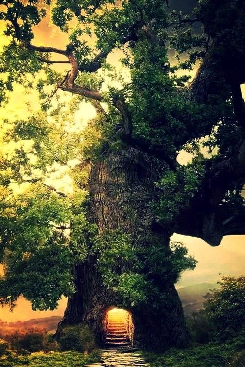 Albero Portal, The Enchanted Forest, California