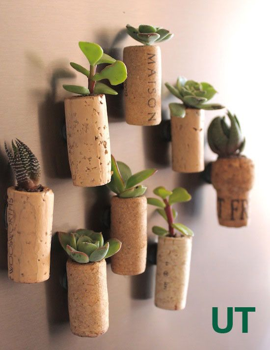 From corks to baby cactus holders