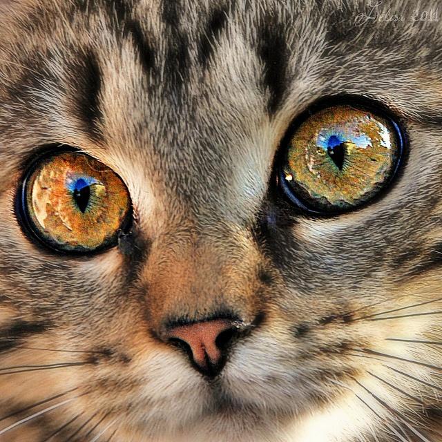 ~~Dans les yeux de Galinette...~~ by Joélisa, via Flickr