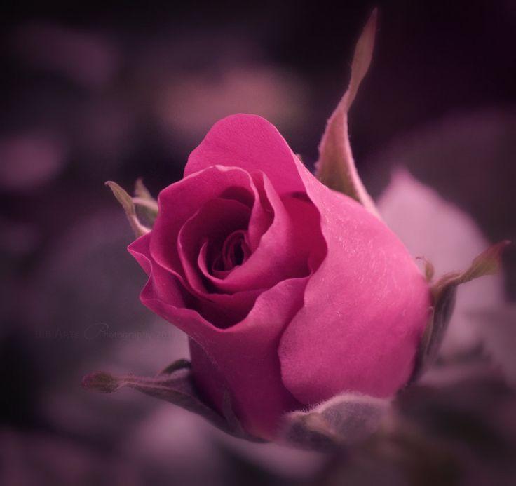 Queen Of Flowers by BiBiARTs.devianta... on @deviantART