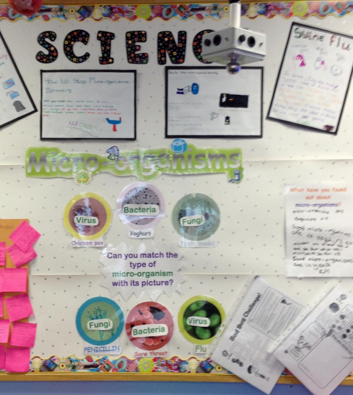Microorganisms Worksheet Ks2
