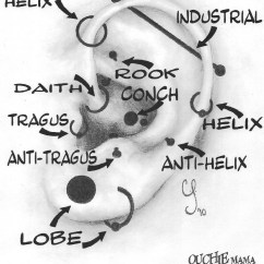 Different Ear Piercings Diagram Elodea Leaf Cell 1000 43 Images About Ink Piercing On Pinterest White