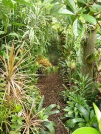 Tropical gardens in temperate climates on Pinterest ...