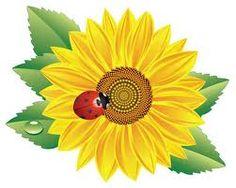 classroom themes - sunflowers