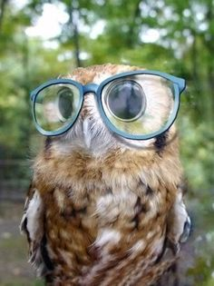 wise old owl ... @Hannah Gielczyk is a fan :)