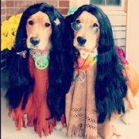 Adorables Criaturas on Pinterest | Dogs, Golden Retrievers ...