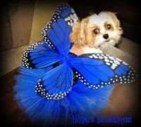 Monarch Butterfly Dog Costume Doggie Halloween Costume ...