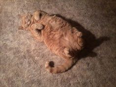 """Here is my """"BOY"""" sleeping Gang UM Style!  Oh Mr. Buttons!"""