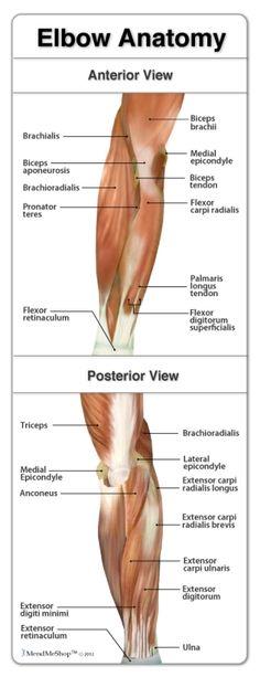 Human Anatomy on Pinterest   Human Anatomy, Scanning ...