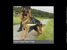 2and4k9Security.com, K9 Security Solutions, K9 Patrols #Lowestoft #Suffolk #Norfolk