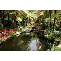Tropical Backyard Ideas on Pinterest | Tropical Backyard ...