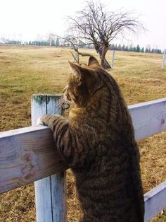 Frederick surveyed his domain, knowing he was king of this piece of hallowed farmland as much as a lion is in the veld.