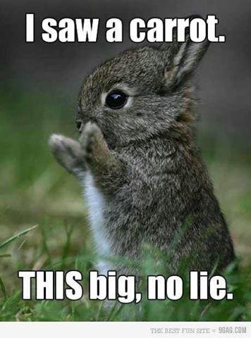 OMG! I love that, that is sooo... cute!!!!