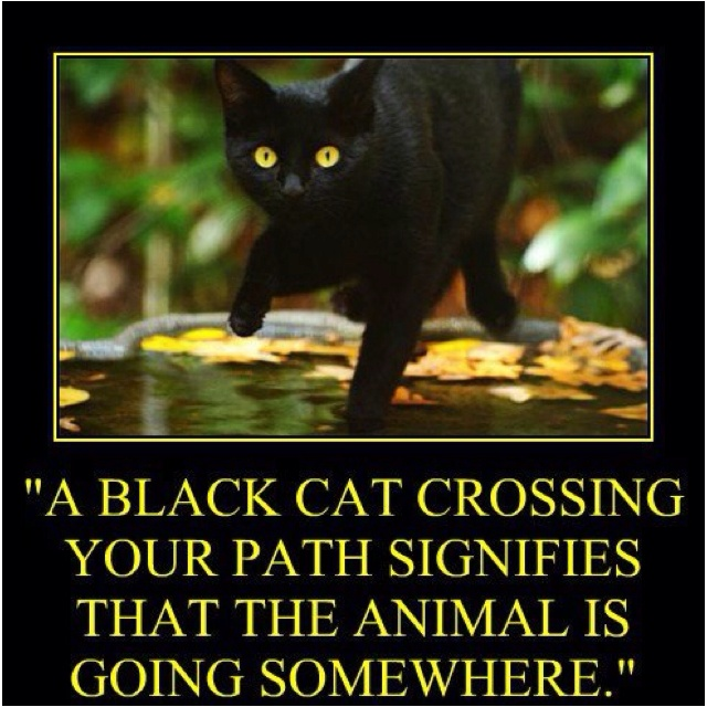 Happy Friday the 13th! Cats Rule Pinterest