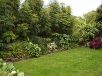 Plants for privacy | Fast Growing Plants For Privacy ...