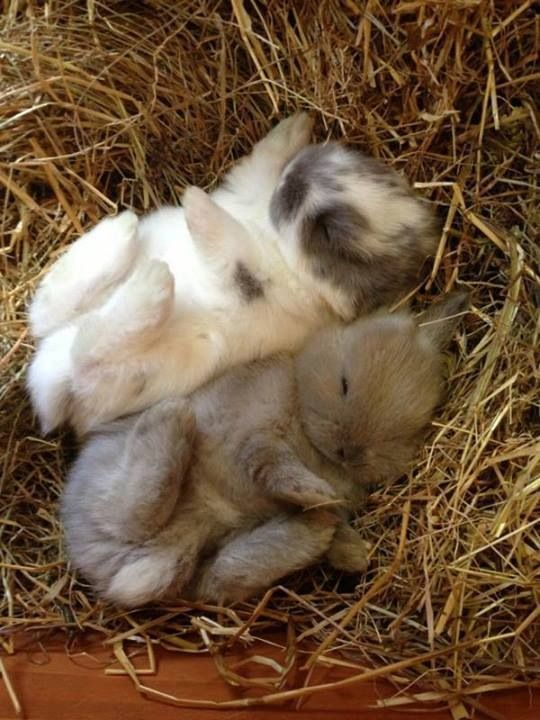 Cute Sleeping Baby Bunnies