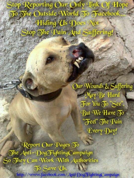 Animal Cruelty Fighting Dog Quotes