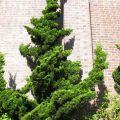 Tree shaped backyard landscaping ideas pinterest