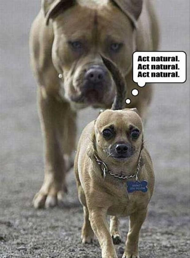 ROFL!! Act Natural Funny Animals #FunnyAnimals Overload – 55 Pics