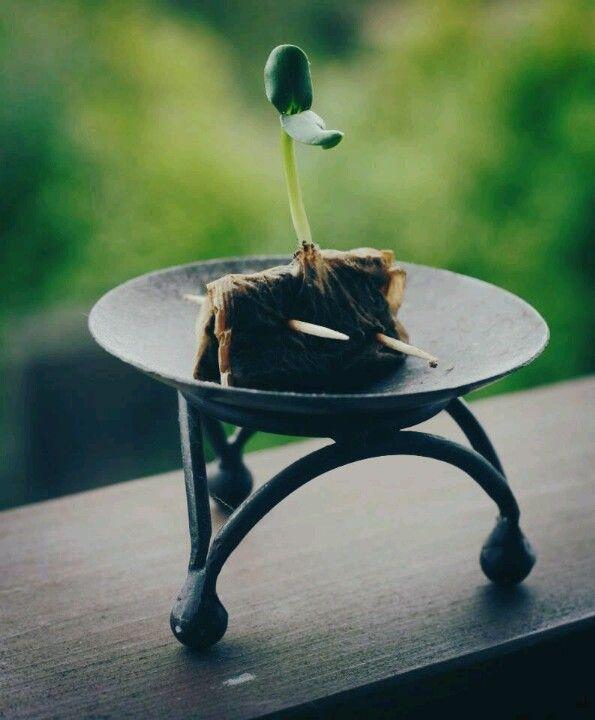 Repurpose tea bags (and coffee filters) | ecogreenlove
