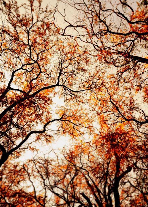 Woodland Rustic Whimsical Tree Photo