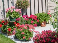 potted plants for patios | patio ideas | Pinterest