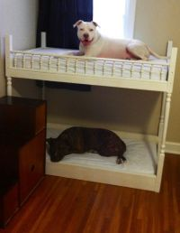 Puppy Bunk Beds - Bing images
