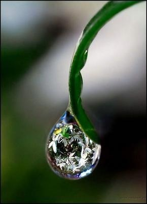 "Japanese poem Haiku by Lady Izumi Shikibu (978-unknown) ""The dewdrop / on a bamboo leaf / stays longer than you / who vanish at dawn"""