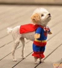 Cutest dog costume ever. | Kid stuff | Pinterest