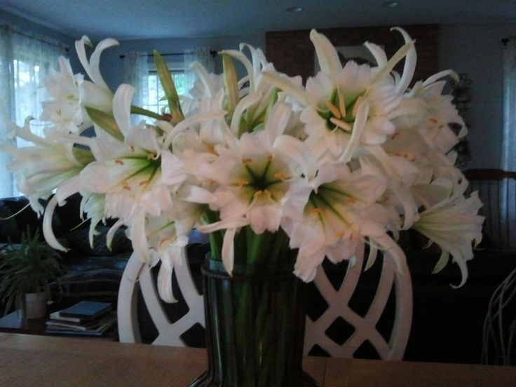 Image Result For Bulbs And More