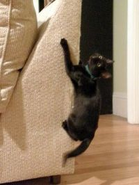 How to Stop a Cat from Clawing Furniture