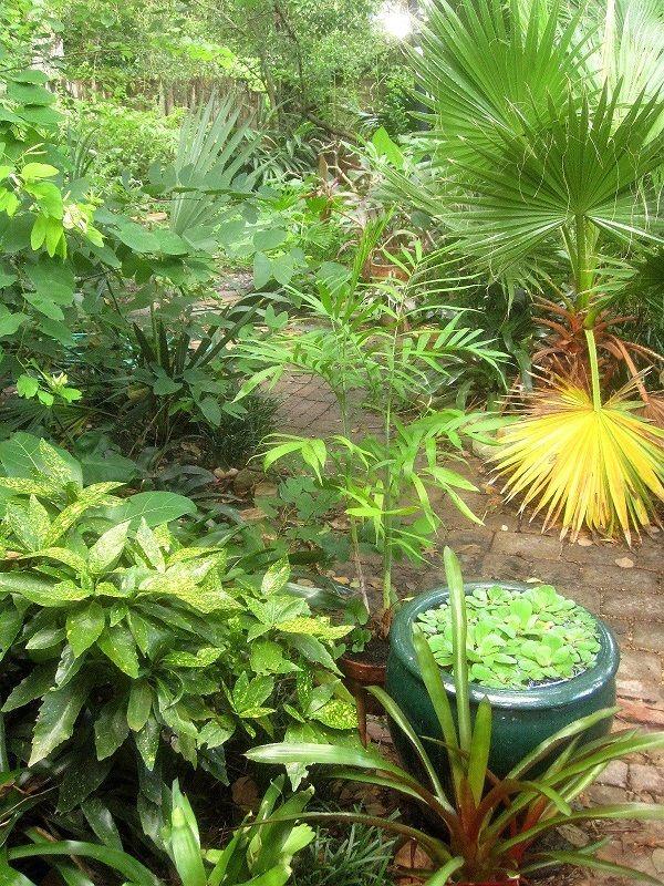 diy tropical garden ideas