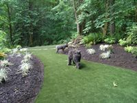 Landscaping Ideas For Wooded Backyard   Home Office Ideas