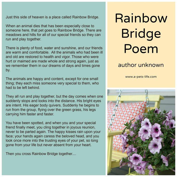 Rainbow Bridge Poem A Pet's Life Pet Loss Pinterest