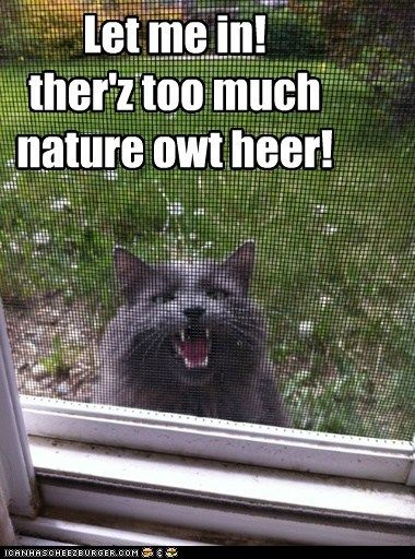 funny cat pictures - Lolcats: Let me in! Visit Waverider @ http://www.waveridermp3.com #cat humor #brainwaves