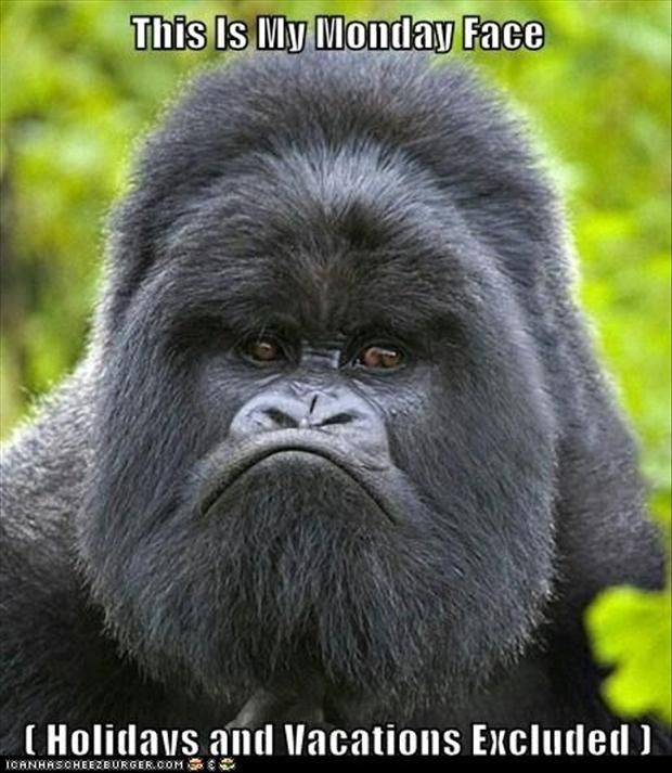 funny monday pictures, angry ape