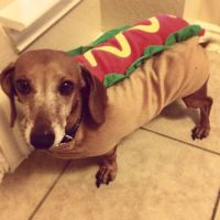 Pin by Mindi Vandagriff on Our Weenie Dog   Pinterest