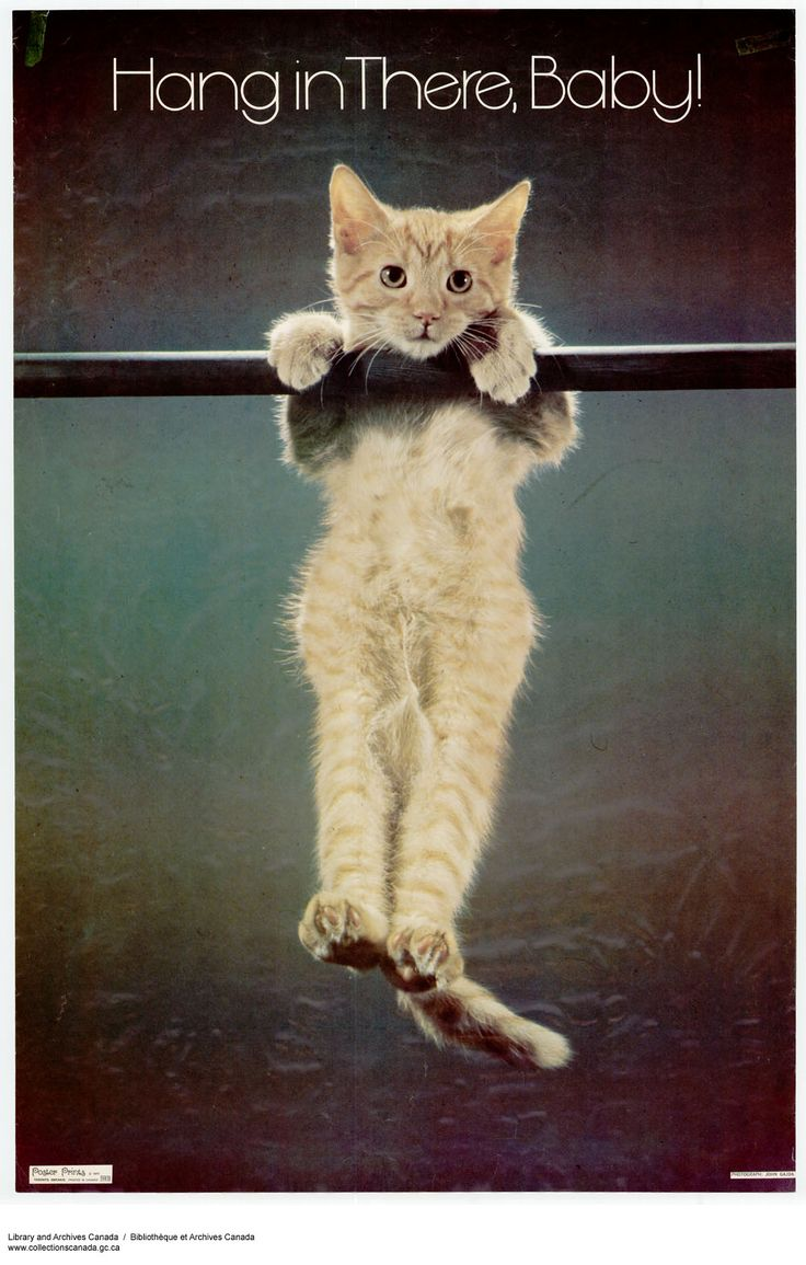 Hang in there, Baby! Original Cat Poster my youth