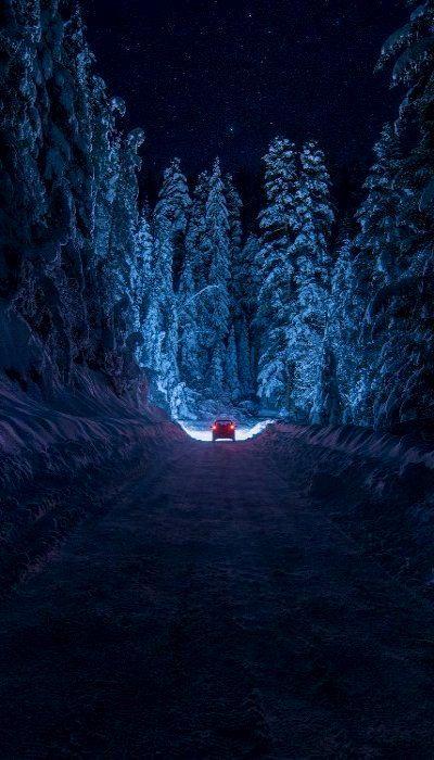 Snowy Forest.. Kyustendil, Bulgaria (by inhiu)