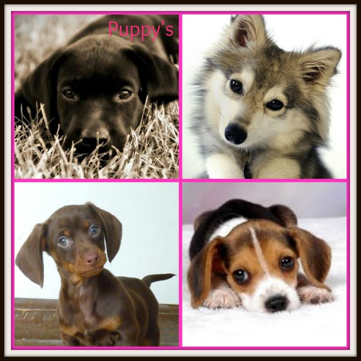 Graphics of puppy's.