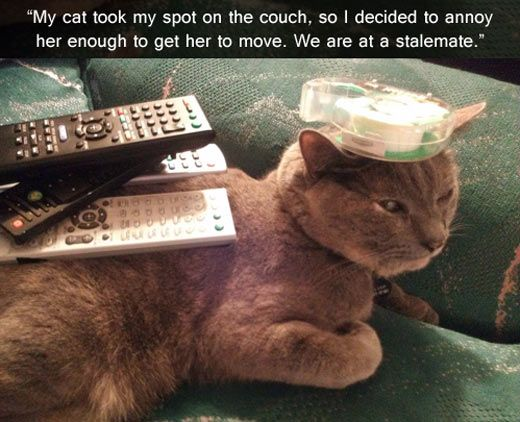My cat took my spot on the couch…