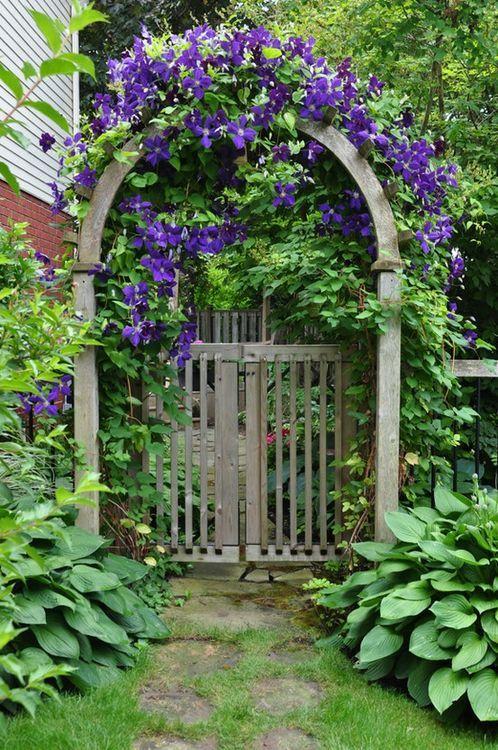 garden arch with clematis  Gardening  Pinterest