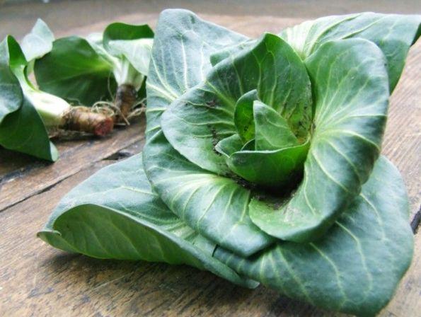 Alcune verdure a foglia verde sono in grado di ricrescere dalla radice, tra queste il radicchio e la cicoria